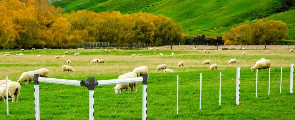 PVC-Post-and-Rail---SheepFence